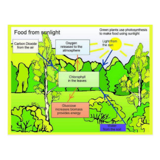 Science, Plants, food from sunlight Postcard