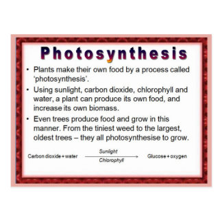 Science,  Plants, Photosynthesis Postcard
