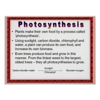 Science,  Plants, Photosynthesis Poster