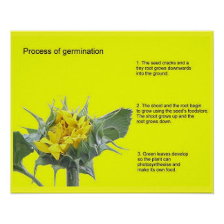 Science Process of germination Poster