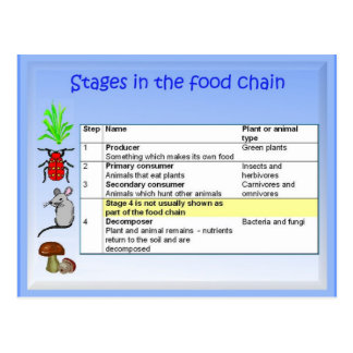 Science, Stages in the Food Chain Postcard