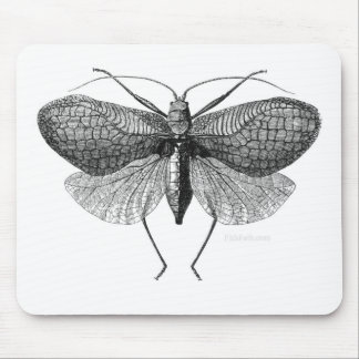 scientific illustration of moth mouse pad