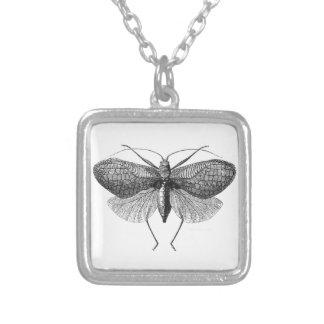scientific illustration of moth pendants
