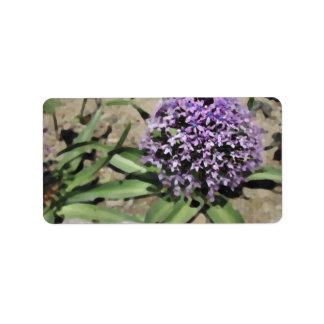 Scilla. Pretty purple flower. Label