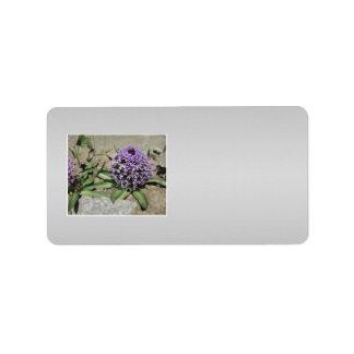 Scilla. Purple flower in a garden. On Gray. Label