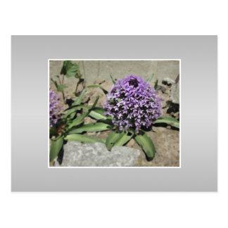 Scilla. Purple flower in a garden. On Gray. Postcard