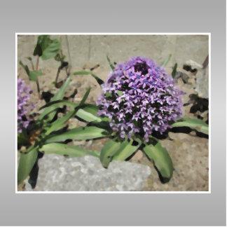 Scilla. Purple flower in a garden. On Gray. Statuette
