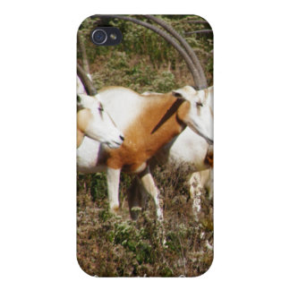 Scimitar Horned Oryx iPhone 4 Speck Case