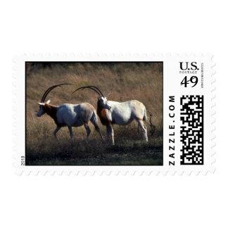 Scimitar-Horned Oryx Postage