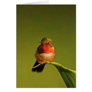 Scintillant Hummingbird male Card