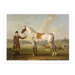 Scipio, Colonel Roche's Spotted Hunter, c.1750 (oi Post Card