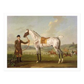 Scipio, Colonel Roche's Spotted Hunter, c.1750 (oi Postcard