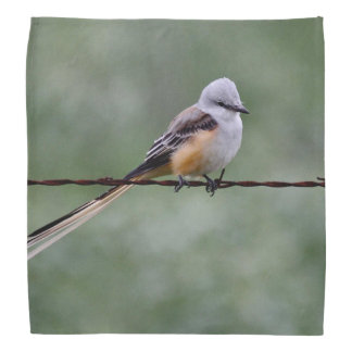 Scissor-tailed Flycatcher perched on barbed wire Bandana