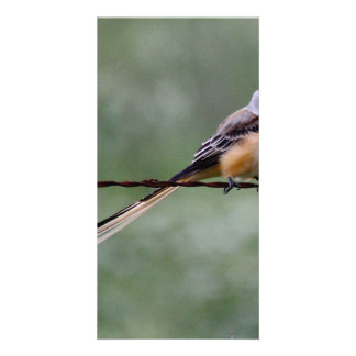 Scissor-tailed Flycatcher perched on barbed wire Card