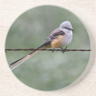Scissor-tailed Flycatcher perched on barbed wire Coaster