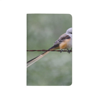 Scissor-tailed Flycatcher perched on barbed wire Journal