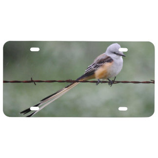 Scissor-tailed Flycatcher perched on barbed wire License Plate