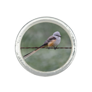 Scissor-tailed Flycatcher perched on barbed wire Photo Ring