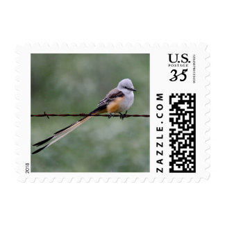 Scissor-tailed Flycatcher perched on barbed wire Postage