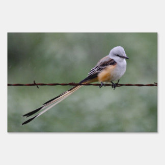 Scissor-tailed Flycatcher perched on barbed wire Signs