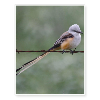 Scissor-tailed Flycatcher perched on barbed wire Temporary Tattoos