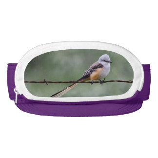 Scissor-tailed Flycatcher perched on barbed wire Visor