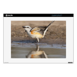 """Scissor-tailed Flycatcher reflected in pond 15"""" Laptop Decal"""