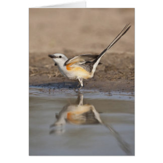 Scissor-tailed Flycatcher reflected in pond Card
