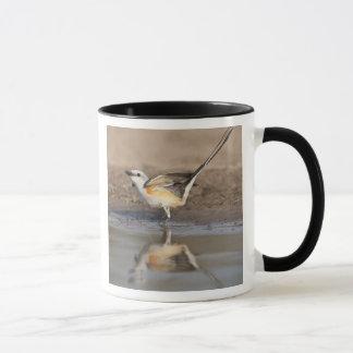 Scissor-tailed Flycatcher reflected in pond Mug