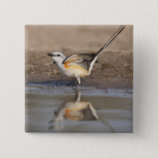 Scissor-tailed Flycatcher reflected in pond Pinback Button