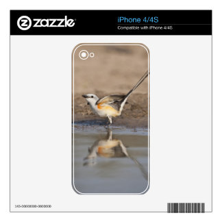 Scissor-tailed Flycatcher reflected in pond Skins For The iPhone 4