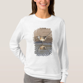 Scissor-tailed Flycatcher reflected in pond T-Shirt