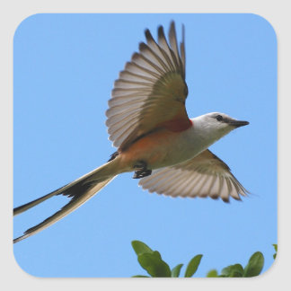 Scissor Tailed Flycatcher Square Sticker