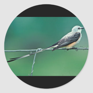Scissor tailed flycatcher round sticker