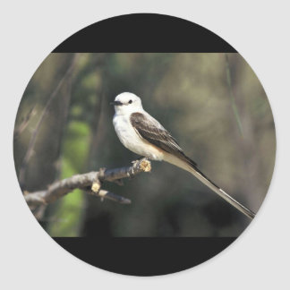Scissor-tailed Flycatcher Stickers
