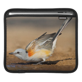 Scissor-Tailed Flycatcher (Tyrannus Forficatus) Sleeve For iPads