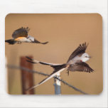 Scissor-Tailed Flycatchers (Tyrannus Forficatus) Mouse Pad