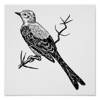 Scissortail Realistic Bird Sketch Poster