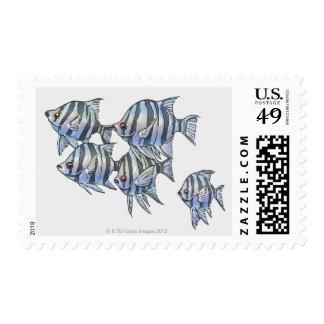 Scissortail Sergeant Postage Stamp