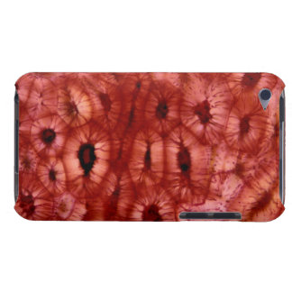 Sclerenchyma Cells from a Cherry Pit Barely There iPod Covers