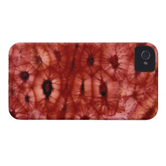 Sclerenchyma Cells from a Cherry Pit iPhone 4 Case-Mate Case