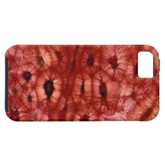 Sclerenchyma Cells from a Cherry Pit iPhone SE/5/5s Case