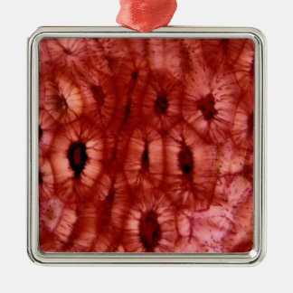 Sclerenchyma Cells from a Cherry Pit Christmas Tree Ornaments