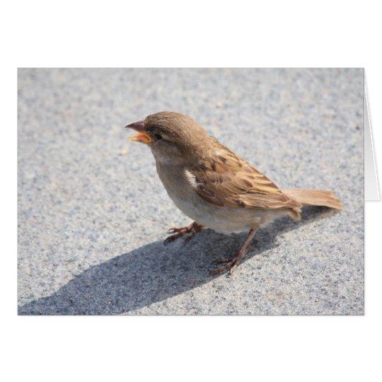 scolding sparrow card
