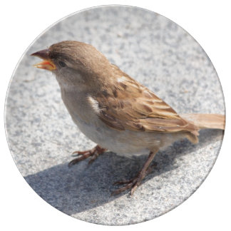 scolding sparrow porcelain plates