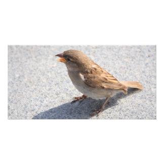 scolding sparrow custom photo card
