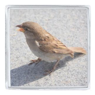 scolding sparrow silver finish lapel pin