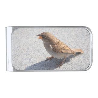 scolding sparrow silver finish money clip