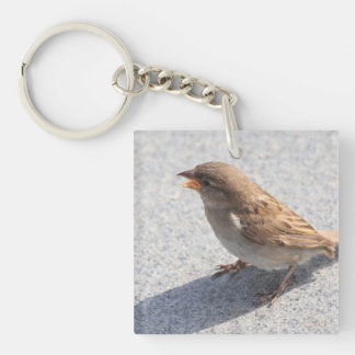 scolding sparrow Single-Sided square acrylic keychain