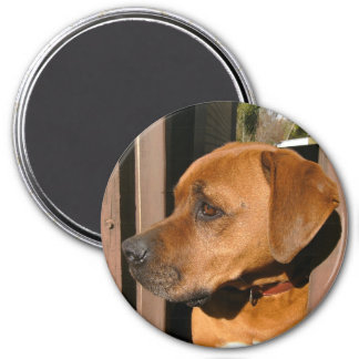 Scooby! 3 Inch Round Magnet